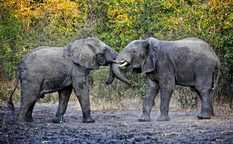 malawi-safari